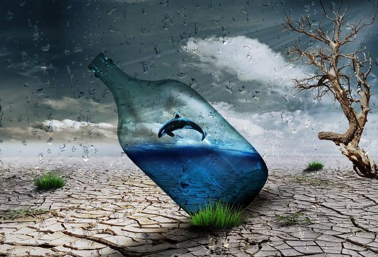 whale in a bottle.jpg